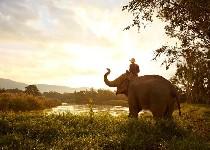 Elephant Camp & Resort